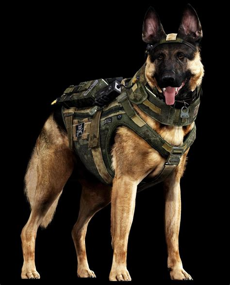 wars dogs of war meet call of duty s new barkout war dogs and met