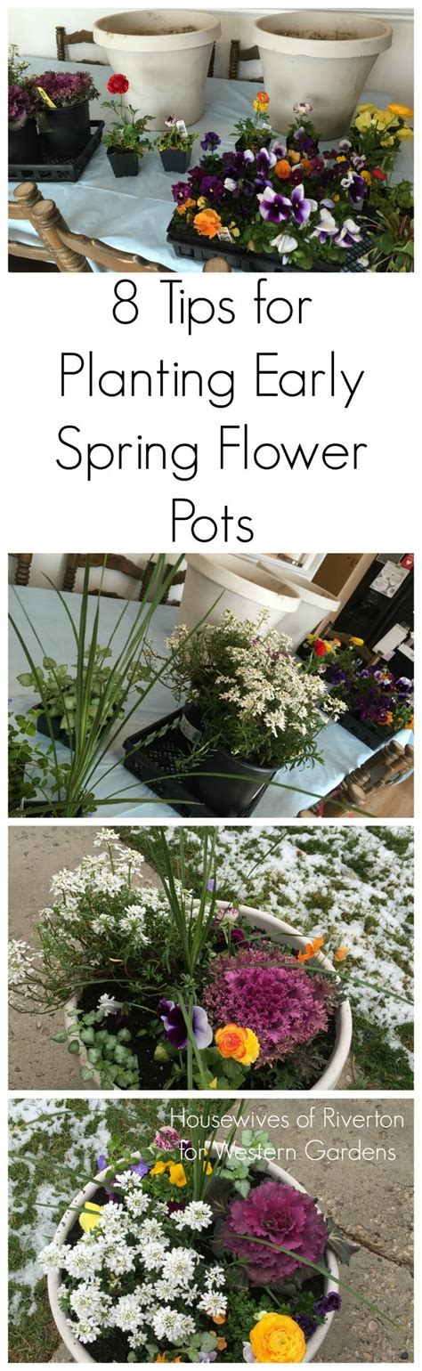 25 best ideas about early spring flowers on pinterest early spring spring flowering bulbs