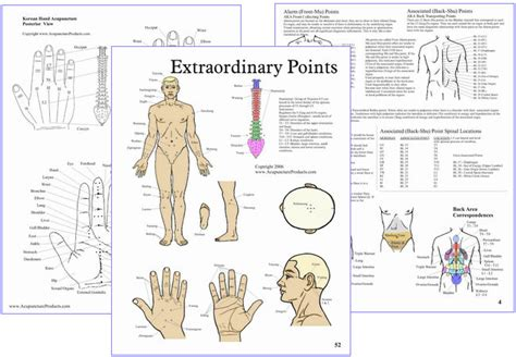atlas of acupuncture points chiro atlas of acupuncture points with formulas