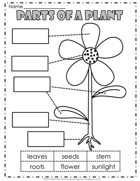 Plant Parts Worksheet by Slide2 Jpg 816 215 1 056 Pixels Kindergarten