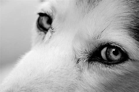 libro the photographers eye a libros de cereza los ojos del perro siberiano por antonio