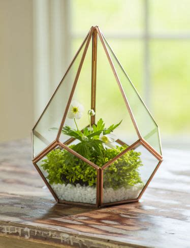 glass terrarium teardrop tabletop terrarium small