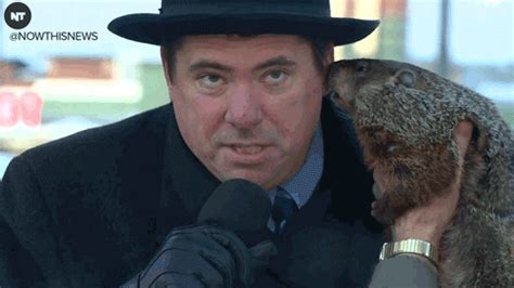 groundhog day ned ryerson gif groundhog day ned ryerson gif 28 images 5 ways that