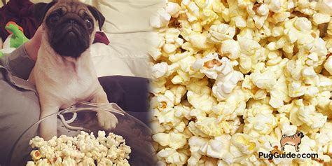 dogs and popcorn can dogs eat popcorn human food your can eat