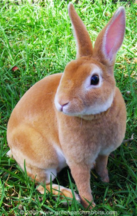 can rabbits see color what breed of rabbit is this yahoo answers