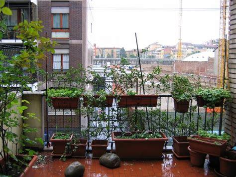terrazze arredate con piante terrazze arredate con piante cerca con terrazze