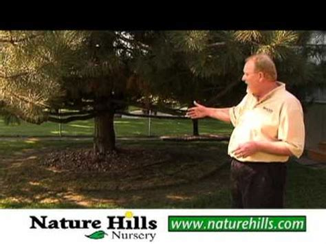 what does a landscaper do pine tree problem area landscape tips youtube
