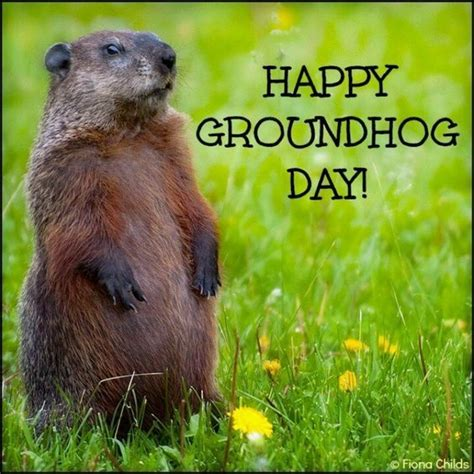 Free Groundhog Day Pictures