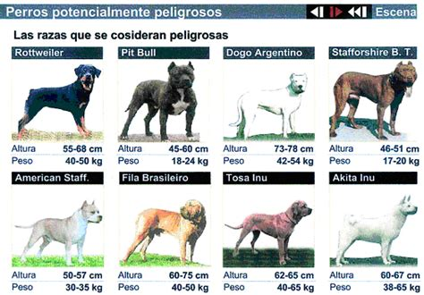 imagenes de hombres en boxer con pollas xxl perro las 10 razas mas peligrosas