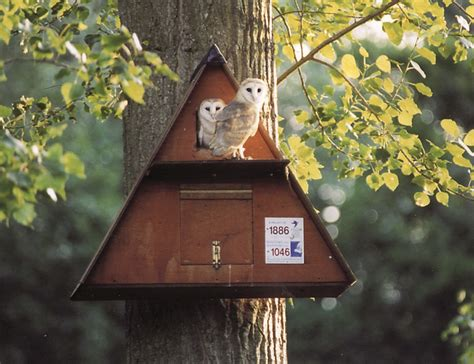 how to attract owls to your backyard les 109 meilleures images 224 propos de nichoirs pour