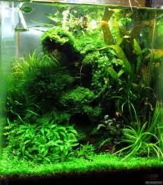 aquascape ideas tropical wurzelwerk flowgrow aquascape aquarium database