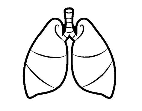 coloring pages of heart and lungs free human heart and lungs coloring pages hospital