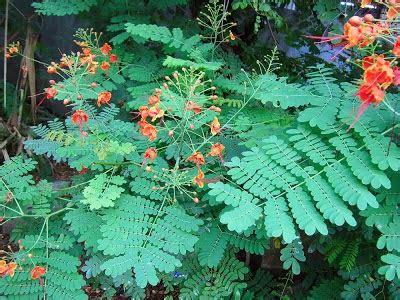 khasiat  manfaat tanaman  obat pengobatan sakit