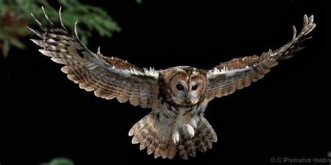 Kupluk Binatang Owl Acg100 3 daftar 43 nama nama hewan dari huruf t lengkap dengan gambar dan penjelasanya nama nama hewan