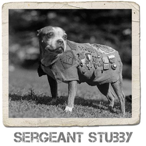Sgt Stubby Badass Of The Week Stubby D 233 Finition What Is