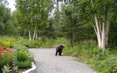 Alaska Botanical Gardens Visit The Alaska Botanical Garden In Achorage And You May Encounter A With 1 100