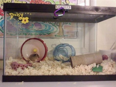 Kandang Set 1000 images about hamster aquarium on