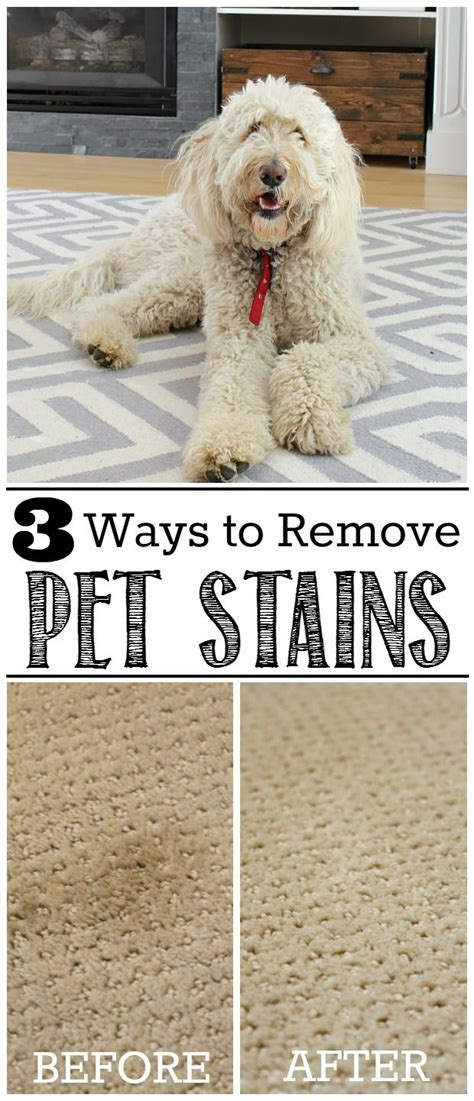 how to clean a seagrass rug pet stains how to remove pet stains from carpet carpets stains and pets