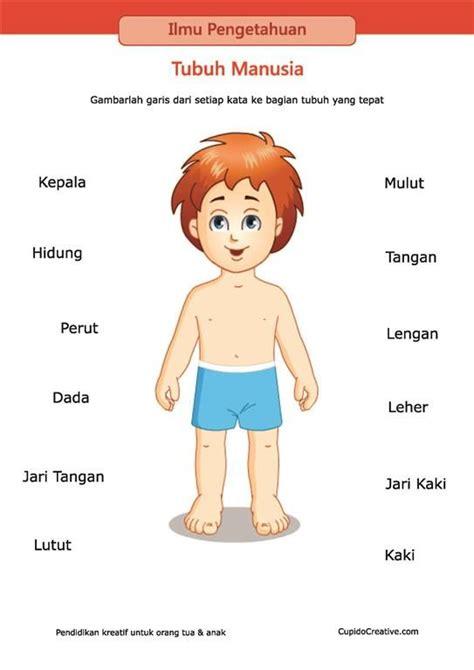 lembar belajar anak sd tk mengenal dan membaca nama anggota bagian badan tubuh manusia