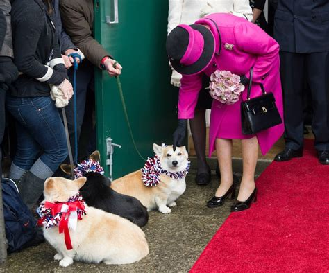 queen elizabeth ii corgis these photos show how the royal family is just like us