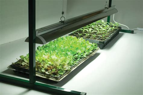 led grow lights 2017 can machine learning be useful in the ehsq sector