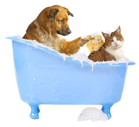 pet bathtub for dogs lumino pets