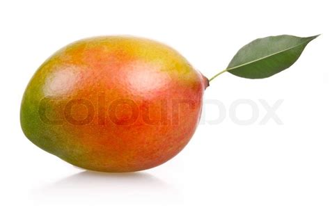 what color is a ripe mango ripe mango fruit isolated on white background stock