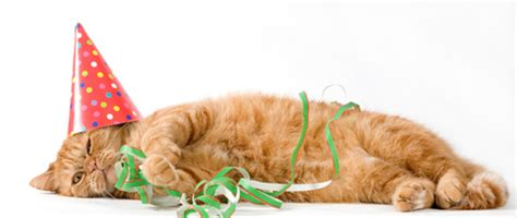Orange Home Decorations by How To Throw A Birthday Party For Your Cat Catster