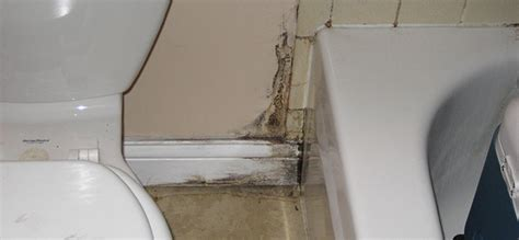can you paint over mold in bathroom can you paint mold in bathroom 28 images painting a