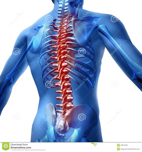 pain body back pain in human body stock photo image 23812160