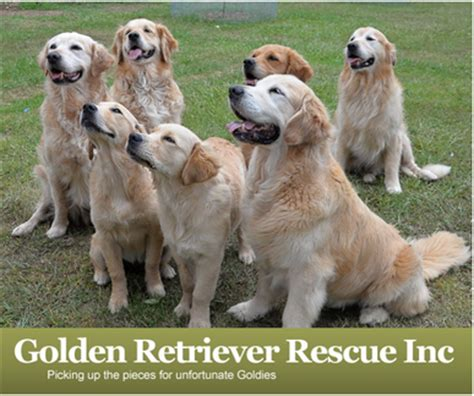 golden retriever rescue south australia donate a kuranda bed to golden retriever rescue inc donate a kuranda bed