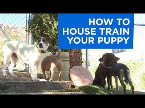 how to get your potty trained how to potty your puppy
