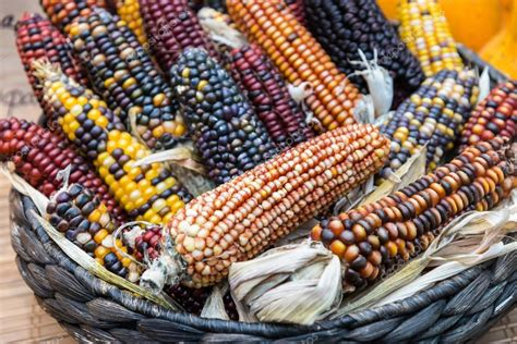 colorful corn colorful indian corn in a basket stock photo