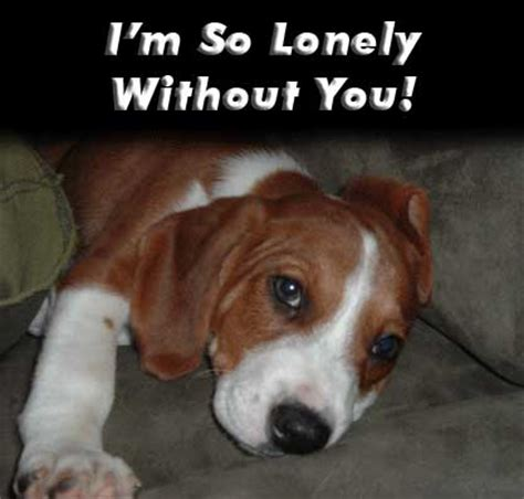 So Lonely Meme - i m so lonely without you meme generator