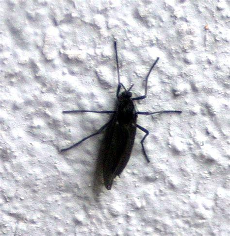 fliegende ameisen in der wohnung insekten sonstiges plauderecke forum