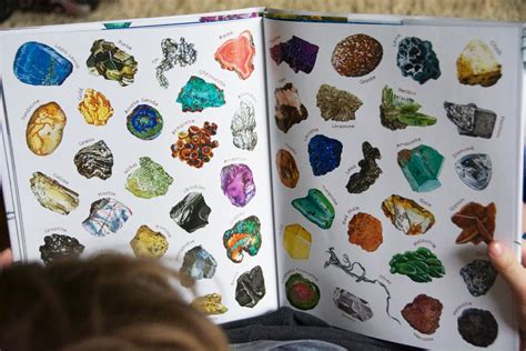 a rock is lively a rock is lively by dianna aston sylvia long babyccino kids daily tips children s products