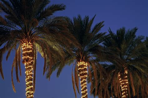Commercial Lighting Phoenix Margie Mae S Holiday Decor Lights On A Palm Tree