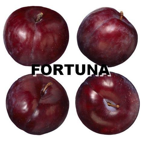 imagenes ciruelas rojas frut 237 cola castillo ciruela