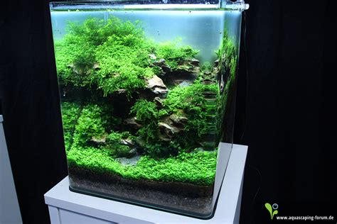 nano aquascaping the art of the planted aquarium 2013 nano aquariums gallery media aquascaping