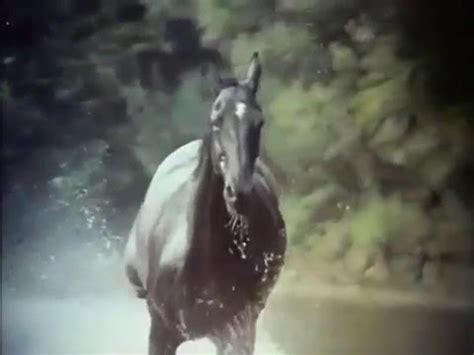themes black beauty form 1 the adventures of black beauty opening and closing theme