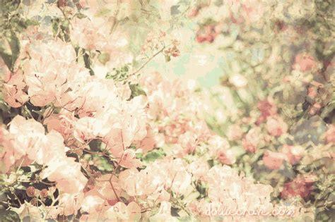 themes for tumblr floral darach themes