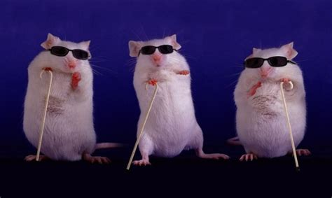Blind Rat Immunology Escapes From The Mouse Trap Scope