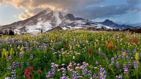 mount rainier national parks conservation association
