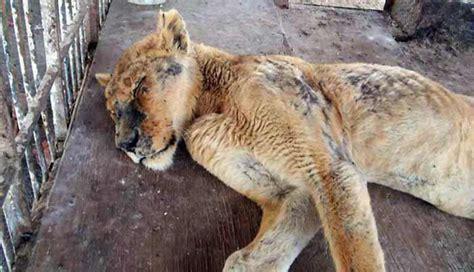 imagenes de animales maltratados maltrato animal maltrato animal