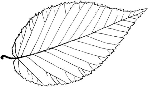 leaf outline coloring page large leaf template coloring home