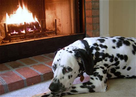 dog and child near my house fireplace safety for children and pets west hartford avon simsbury