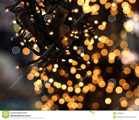 christmas lights hanging in a tree stock photo image