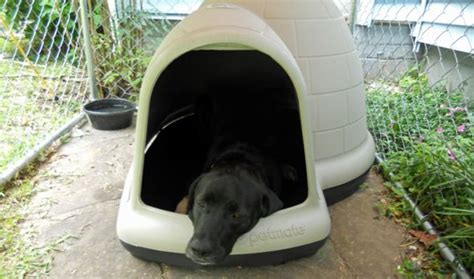 indigo xl dog house 25 best ideas about extra large dog house on pinterest