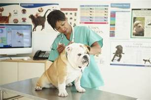 Duties Of A Vet by Veterinarian Description Learn About Being A Vet