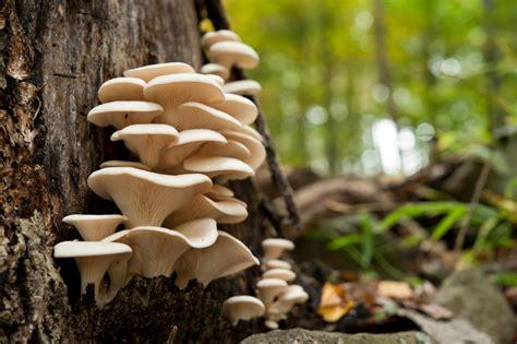 Pilze Im Garten Arten by Pilze 187 220 Bersicht 252 Ber Die Sorten